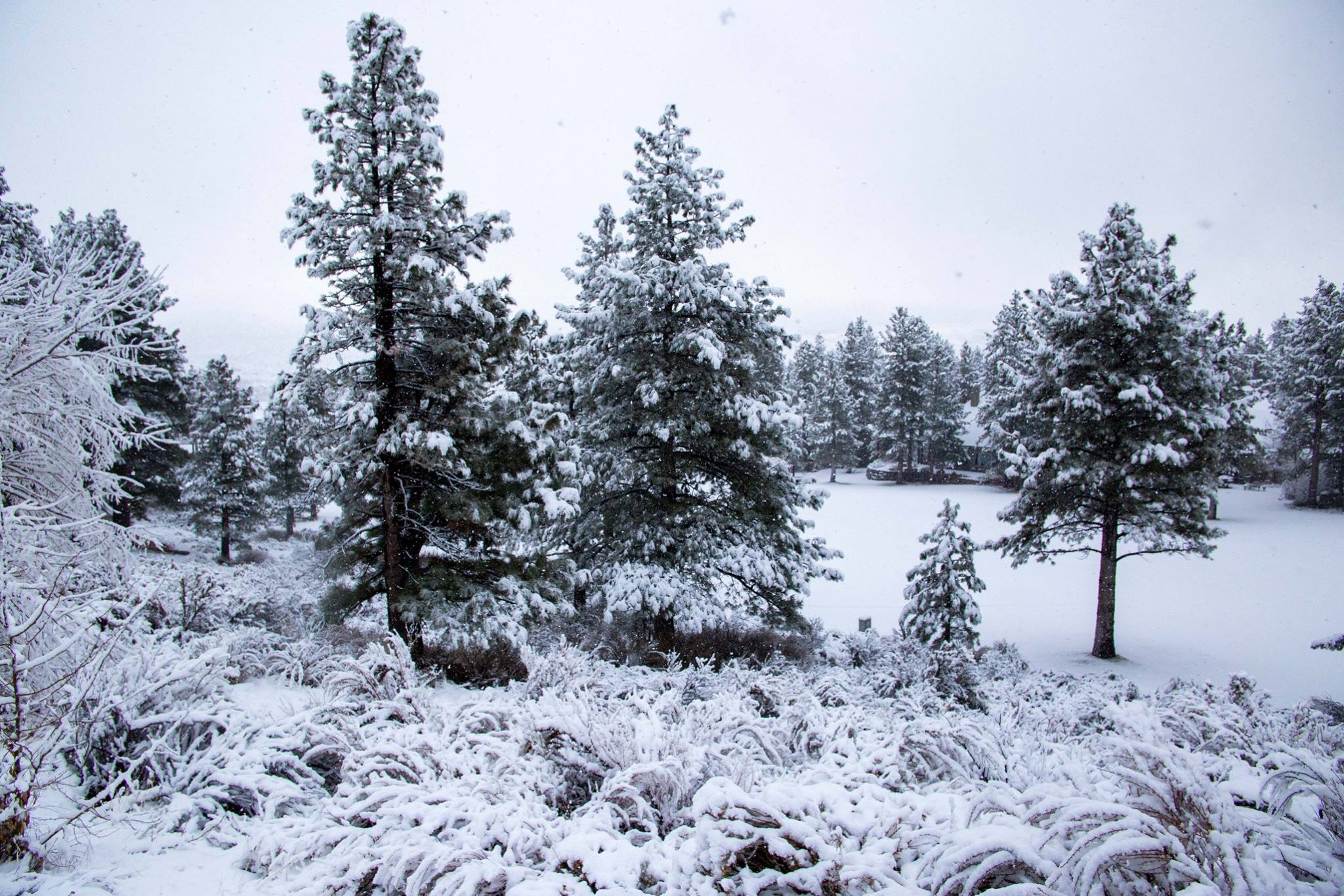 Image result for parc foret reno winter